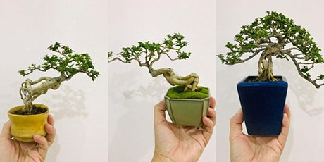 Mini Bonsai Workshop