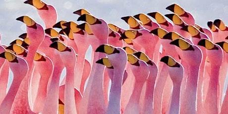 Pink Flamingo Virtual Comedy tickets