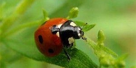 Pest Identification and Control - Zoom Virtual Class tickets