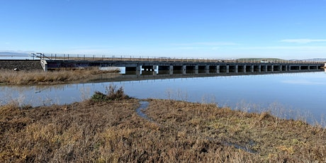 King Tides in Alviso, CA! *Self-guided Volunteer Opportunity* tickets