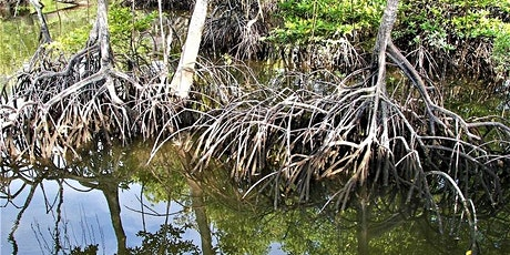 Sungei Buloh - Mangroves & More