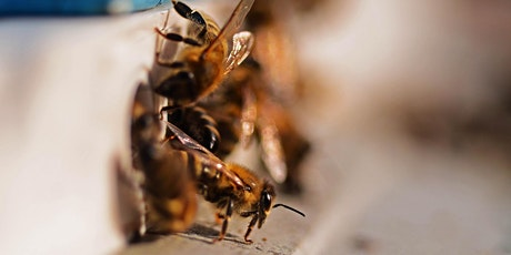 Beekeeping in the Urban Environment - An introduction tickets
