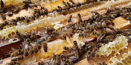 Beekeeping Course in London  - Practical Course  - 2 Students Per Tutor. tickets