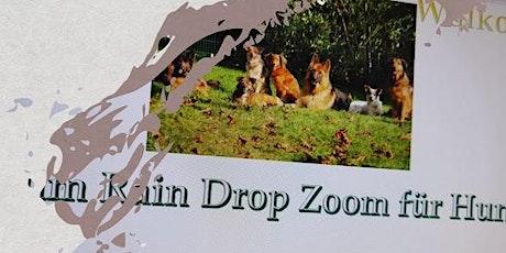 Online Training - Raindrop Technik für Hunde Tickets