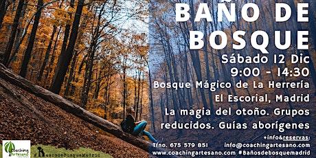 Baño de Bosque sábado  12 Dic - Otoño Bosque La Herrería El Escorial entradas