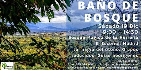Baño de Bosque sábado  19 Dic - Otoño Bosque La Herrería El Escorial entradas