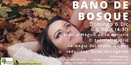 Baño de Bosque domingo 6 Dic - Otoño Bosque La Herrería El Escorial entradas