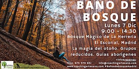 Baño de Bosque lunes 7 Dic - Otoño Bosque La Herrería El Escorial entradas