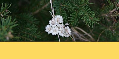 Un peu de magie dans ton bas de Noël! Des produits d'herboristerie à offrir billets