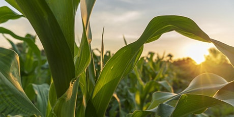 Advanced Corn Production in 2021 tickets