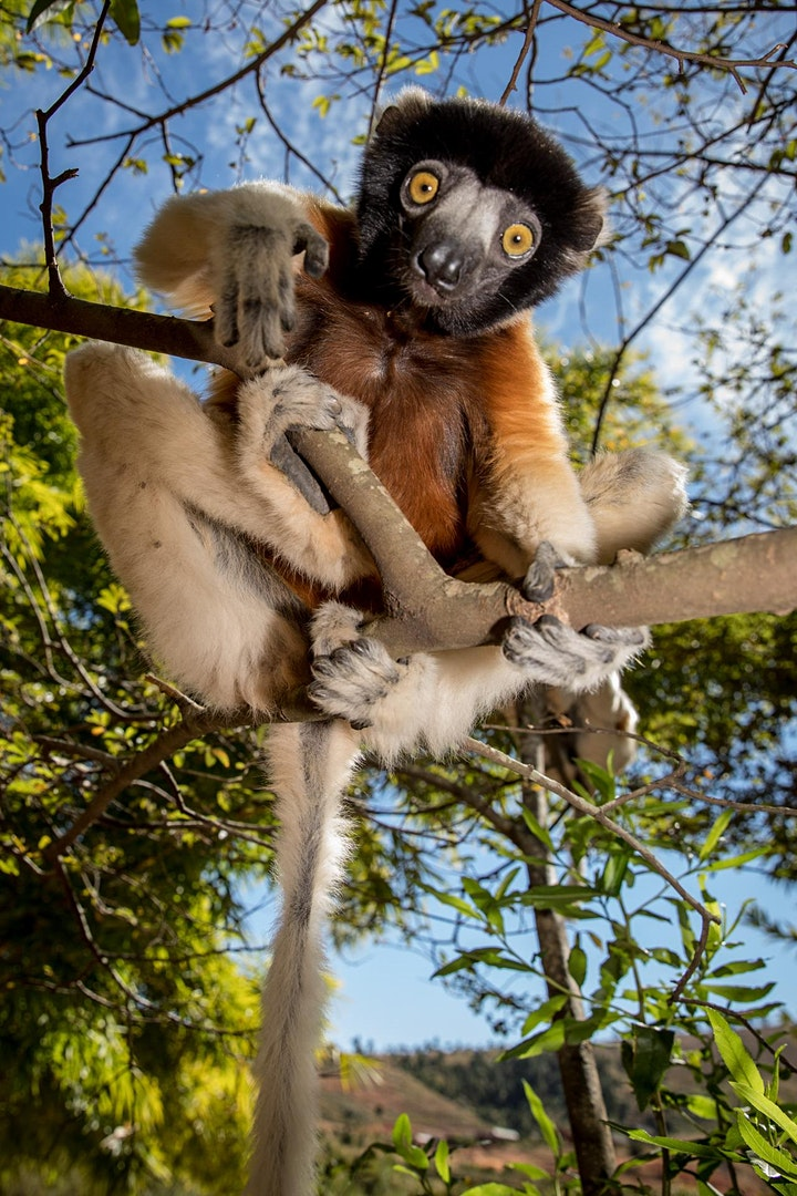 Melbourne Zoo Wildlife Photography Masterclass With Jay Collier image