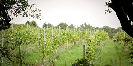 Vineyard Experience (Tour and Tasting) tickets