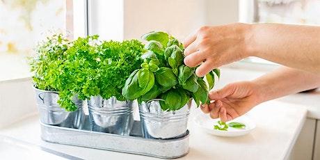 Livestream: Indoor Salad Gardening with Peter Burke tickets