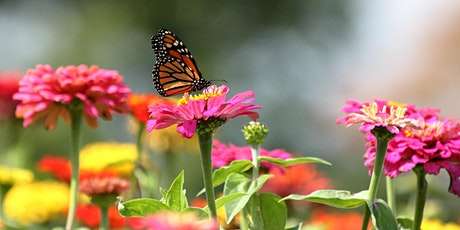 Butterfly and Pollinator Gardening 101 with Fleet Farming (Webinar) tickets