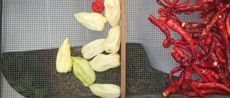 How to Grow Super Hot Peppers Webinar tickets