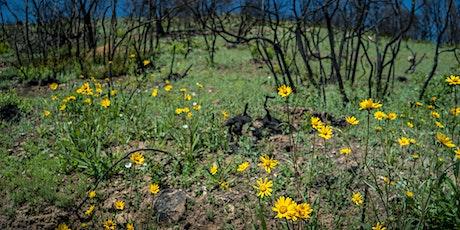 Guided Virtual Hike: Glen Oaks Ranch 12-8-20 tickets