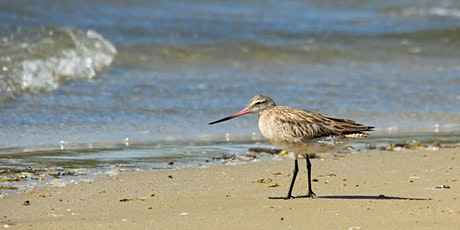 Birdwatching at Alfred Cove (City of Melville), Western Australia tickets