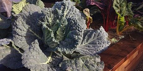 Online workshop! Grow Your Own Food in January tickets