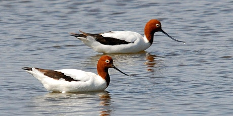 Birdwatching at Len Howard Cons. Park (City of Mandurah), Western Australia tickets
