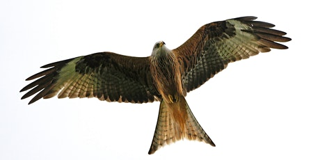 Nature Friendly Farming at Argaty Red Kites tickets