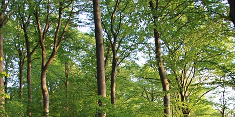 Towards an EU policy framework for forest ecosystem services tickets