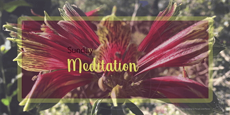 Meditation with the Bush Flowers tickets