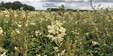 Cambridgeshire Summer Wild Food Foraging Course/Walk tickets