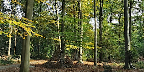 Bosbaden / Shinrin-Yoku / Forest Bathing - Berg en Dal, Nijmegen tickets