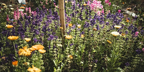 Grow Your Own Cut Flower Garden tickets