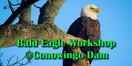 Bald Eagle Photography at Conowingo Dam tickets