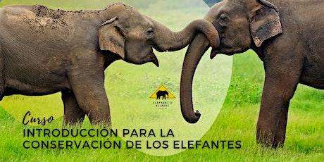 Curso Introducción para la Conservación de los Elefantes entradas