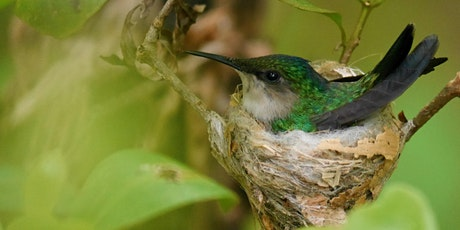 Challenges and opportunities for Caribbean endemic bird conservation tickets