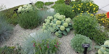 Gardening with Herbaceous Perennials Webinar Tickets