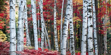 White Mountains Fall Foliage tickets