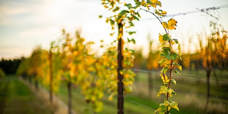 Guided Vineyard Tour and Tasting Experience