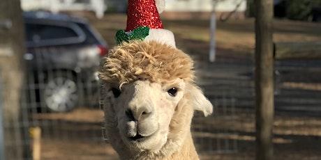 Fleece Navidad! Christmas on the farm with Santa and the Alpacas tickets