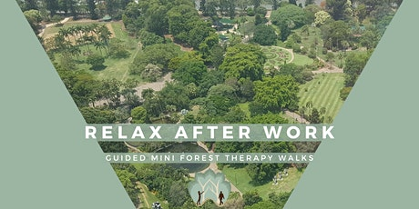 Relax after work with Forest Therapy tickets