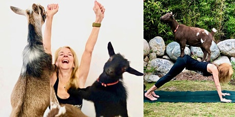 Hello Critter Goat Yoga in Pasadena tickets