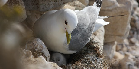 Seabird conservation experience tickets