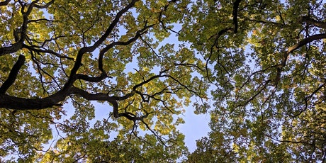 If this tree could talk... Nature Writing Workshop with Amanda Tuke tickets