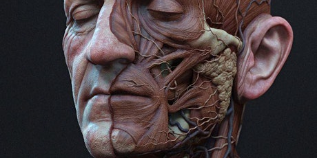 Applied Anatomy for Facial Aesthetics: A Cadaver Dissection Course-MA tickets