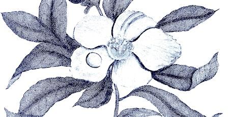 Sunday Botanical Drawing Class tickets