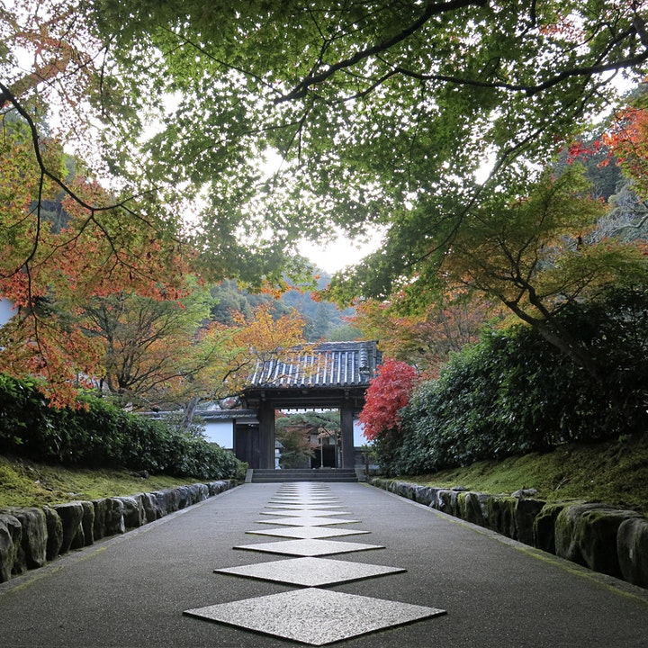 'Zen Garden, Zen Mind'  Special Autumn Edition, Kyoto, Japan image