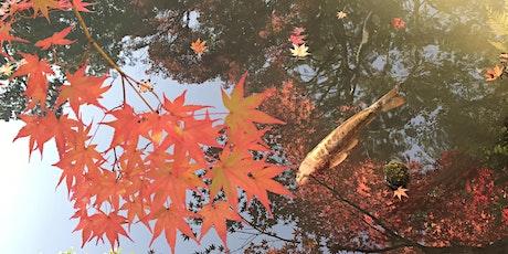 'Zen Garden, Zen Mind'  Special Autumn Edition, Kyoto, Japan tickets