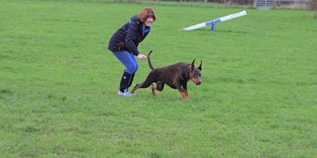 Fun Gundog intro dog training tickets