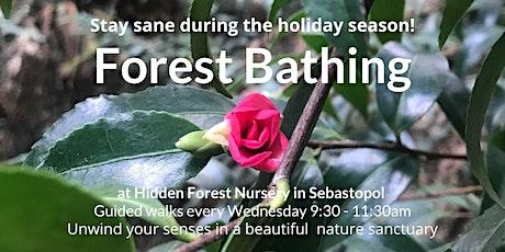 Forest Bathing at Hidden Forest Nursery & Botanical Reserve tickets