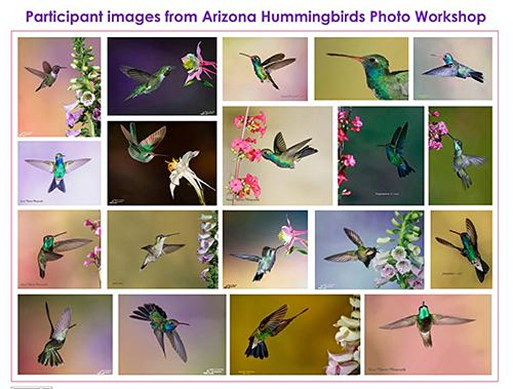 Apr 29-May 2, 2021 - Arizona Hummingbird & Night Photog:  Madera Canyon image