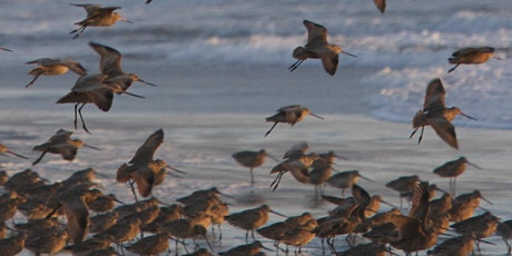 Winter Birds of Tomales Bay tickets