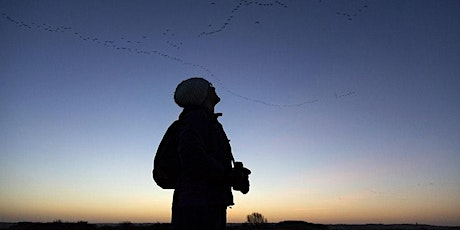 Pink-footed geese sunrise walk tickets