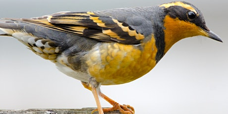 The Wide Variety of Winter Birds in Point Reyes tickets